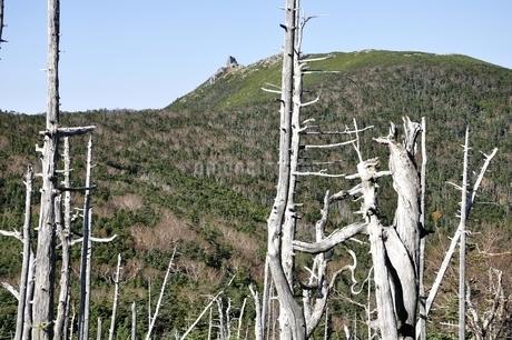 金峰山と縞枯れ現象の写真素材 [FYI03411433]