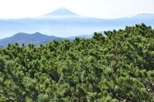 金峰山のハイマツと富士山の写真素材 [FYI03411460]