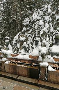 冬の高野山奥之院の写真素材 [FYI03411701]