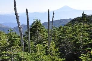 国師ヶ岳から富士山を望むの写真素材 [FYI03411758]