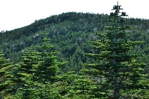 シラビソと北奥千丈岳の写真素材 [FYI03411760]