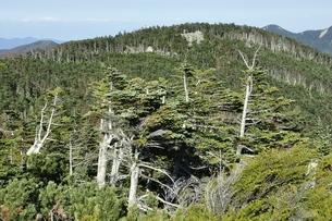 縞枯現象の国師ヶ岳の写真素材 [FYI03411775]