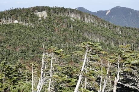 国師ヶ岳の縞枯れ現象と甲武信ヶ岳の写真素材 [FYI03411778]