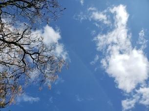 空の写真素材 [FYI03411993]