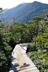 夢の庭園より望む金峰山の写真素材 [FYI03412008]