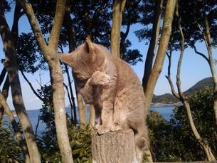 嘆くネコの写真素材 [FYI03412099]