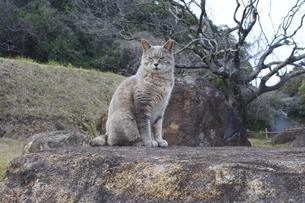 瞑想にふけるネコの写真素材 [FYI03412101]