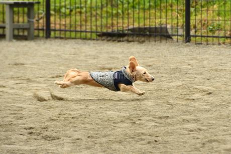 飛ぶ犬の写真素材 [FYI03412205]