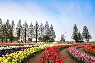 あけぼの山農業公園 日本 千葉県 柏市の写真素材 [FYI03412243]