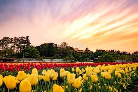 あけぼの山農業公園 日本 千葉県 柏市の写真素材 [FYI03412244]