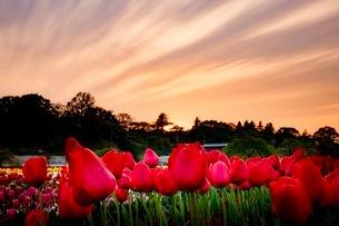 あけぼの山農業公園 日本 千葉県 柏市の写真素材 [FYI03412246]