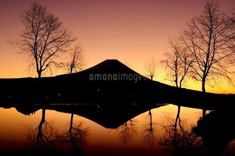 ふもとっぱらキャンプ場 日本 静岡県 富士宮市の写真素材 [FYI03412263]
