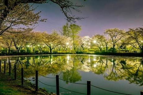 運動公園 日本 埼玉県 鶴ヶ島市の写真素材 [FYI03412305]