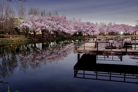 運動公園 日本 埼玉県 鶴ヶ島市の写真素材 [FYI03412309]