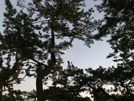 木々から覗く月の写真素材 [FYI03412426]