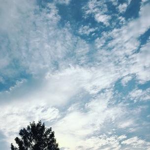 青空と大きな木の写真素材 [FYI03412554]