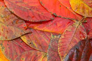 落葉の写真素材 [FYI03412620]