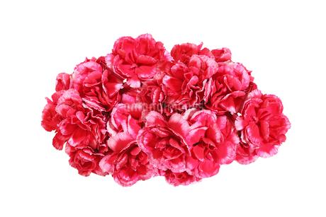 カーネーションの花束の写真素材 [FYI03412624]