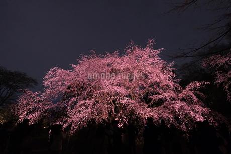六義園 日本 東京都 文京区の写真素材 [FYI03412705]