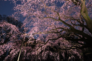 六義園 日本 東京都 文京区の写真素材 [FYI03412707]