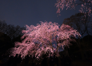 六義園 日本 東京都 文京区の写真素材 [FYI03412708]