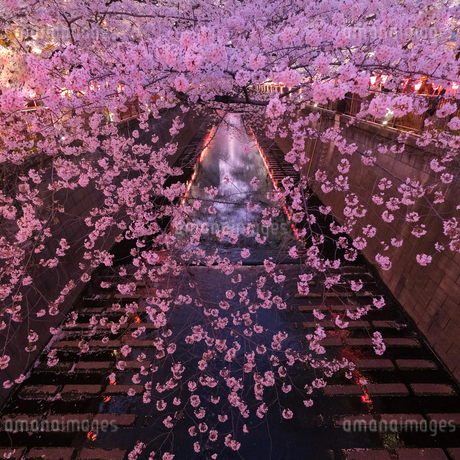 目黒川 日本 東京都 目黒区の写真素材 [FYI03412716]