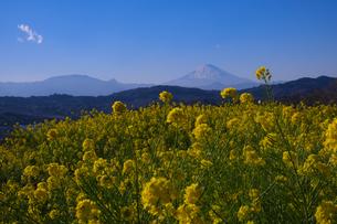 吾妻山公園 日本 神奈川県 二宮町の写真素材 [FYI03412723]