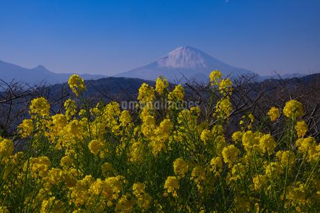 吾妻山公園からの眺め 日本 神奈川県 二宮町の写真素材 [FYI03412724]