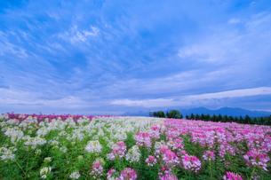 富良野市 日本 北海道 富良野市の写真素材 [FYI03412727]