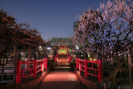 亀戸天神 日本 東京都 江東区の写真素材 [FYI03412737]