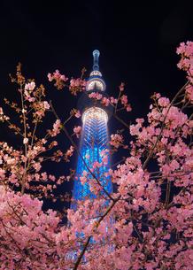 スカイツリー 日本 東京都 墨田区の写真素材 [FYI03412740]