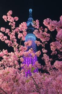 スカイツリー 日本 東京都 墨田区の写真素材 [FYI03412744]