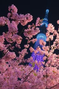 スカイツリー 日本 東京都 墨田区の写真素材 [FYI03412747]