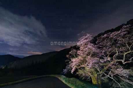 駒つなぎの桜 日本 長野県 阿智村の写真素材 [FYI03412779]
