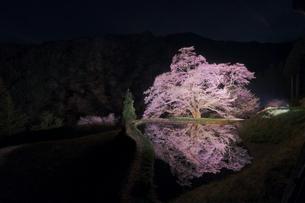 駒つなぎの桜 日本 長野県 阿智村の写真素材 [FYI03412780]
