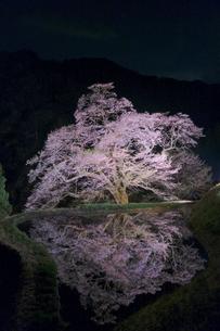 駒つなぎの桜 日本 長野県 阿智村の写真素材 [FYI03412781]