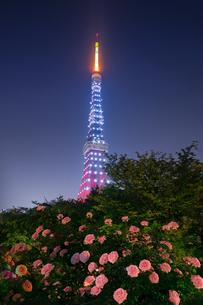 東京タワー 日本 東京都 港区の写真素材 [FYI03412792]