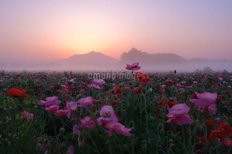 小貝川ふれあい公園 日本 茨城県 下妻市の写真素材 [FYI03412801]