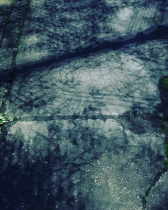 夜道の紅葉の写真素材 [FYI03413508]