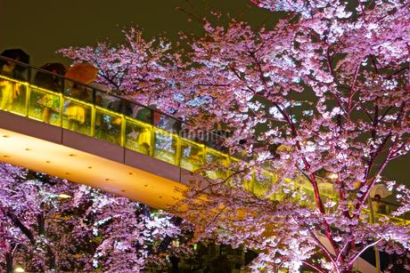 東京ミッドタウンの夜桜の写真素材 [FYI03413526]