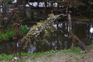 池の写真素材(岩手県中尊寺)の写真素材 [FYI03413749]