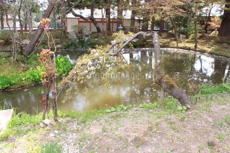 池の写真素材(岩手県中尊寺)の写真素材 [FYI03413753]