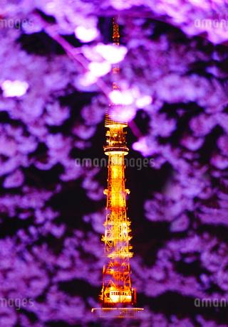 桜から覗く東京タワーの写真素材 [FYI03413823]