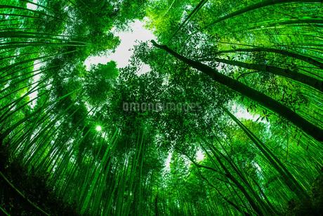 京都・嵐山の竹林の写真素材 [FYI03413887]