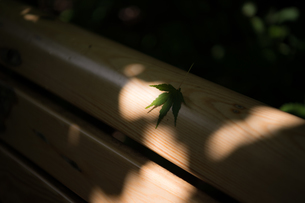 ベンチに座る葉の写真素材 [FYI03414049]