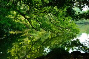 緑の写真素材 [FYI03414106]