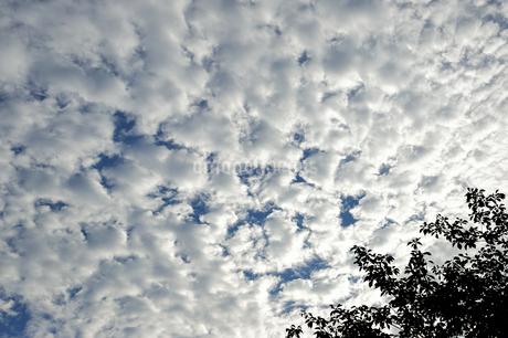 雲り空の写真素材 [FYI03414107]