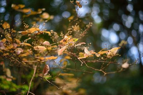 枯葉の写真素材 [FYI03414129]