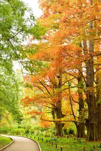 紅葉と緑の写真素材 [FYI03414131]