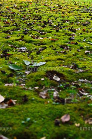 苔と落ち葉の写真素材 [FYI03414135]